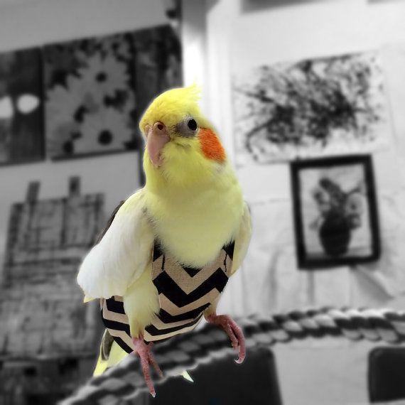 A Nappy Diaper Flight Suite For Your Cockatiel By Cockatielhug 25 00 Cockatiel Love Birds Pet Pet Birds