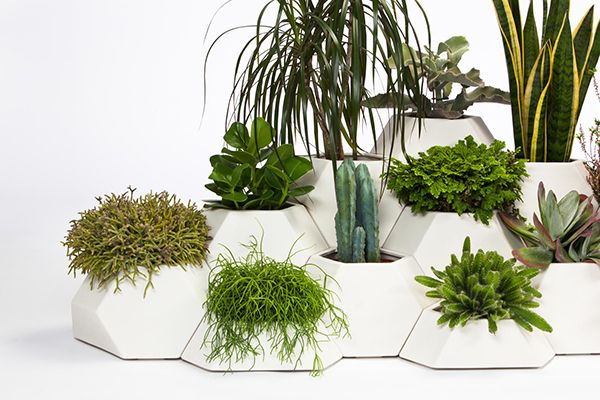 A collection of pots in different sizes that fit together like a puzzle, creating a unique indoor garden. #gardening #plants #YankoDesign