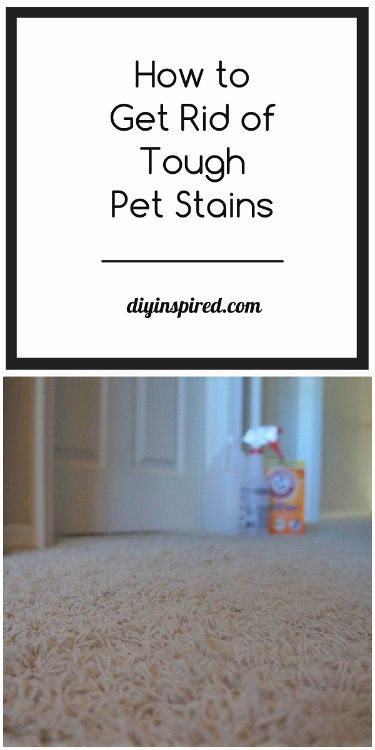 How To Remove Tough Pet Stains Do It Yourself Today