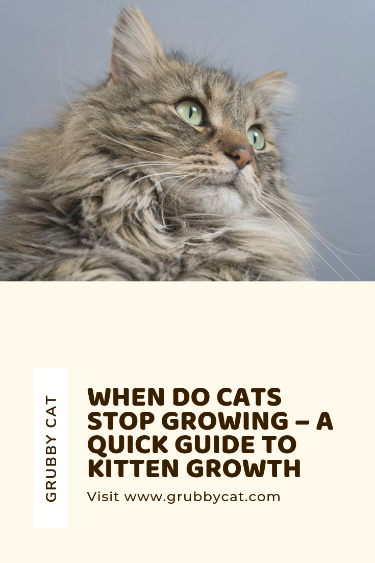 When Do Cats Stop Growing A Quick Guide To Kitten Growth Cats Kitten Quick Guide