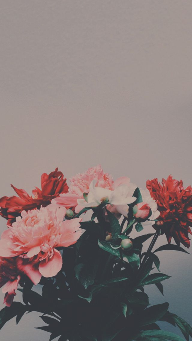 Peony Flowers Bouquet #iPhone #5s #wallpaper