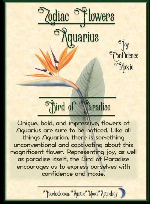 Bird Of Paradise Flower Of Aquarius Aquarius Flower Birds Of Paradise Flower Birds Of Paradise
