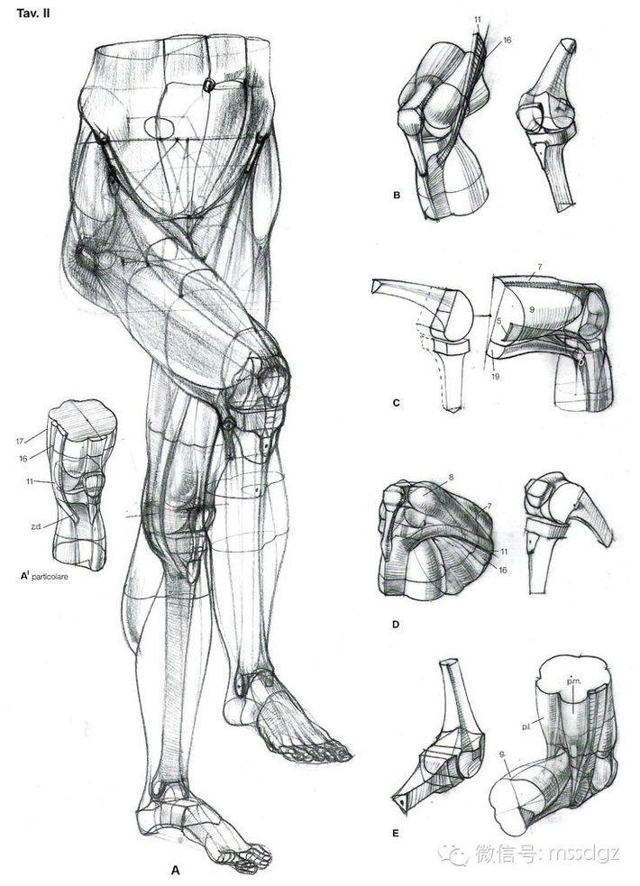 Pin von Iya Chicherina auf Anatomy | Pinterest | Lippe zeichnungen ...