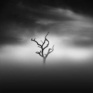lonely-tree-300x300.jpg