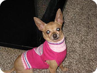 Shellsburg Ia Chihuahua Mix Meet Sara A Dog For Adoption Dog Adoption Chihuahua Mix Kitten Adoption