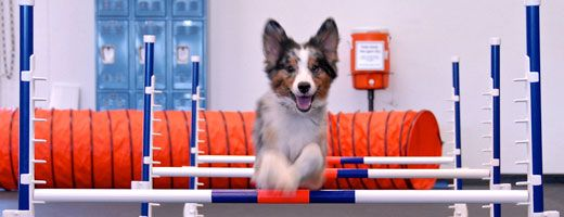 Zoom Room Portland Dog Training Grand Opening To Benefit Ohs Rsvp