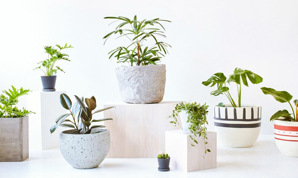 At The Foliage Indoor Plant You Will Get Plethora Of Choice In Plants, Pots.  We Can Help You With The Instalment And Maintenance Of These Green Beauties.