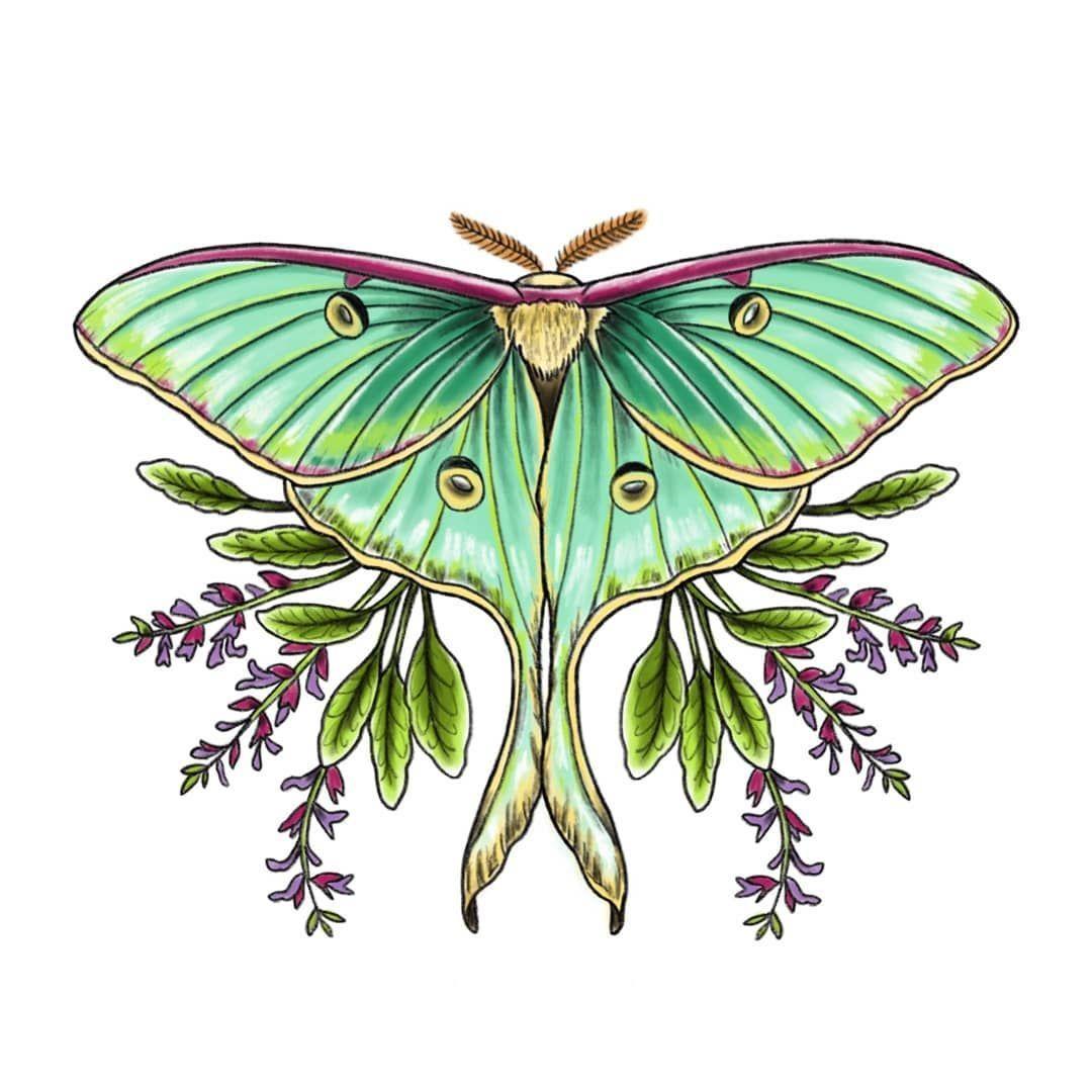 La Curieuse Auf Instagram Luna Motte Actias Luna Verfugbar Grosse 14 X 11 Cm Nachste Gaste Und Tag In 2020 Luna Moth Tattoo Lunar Moth Tattoo Moth Tattoo Design