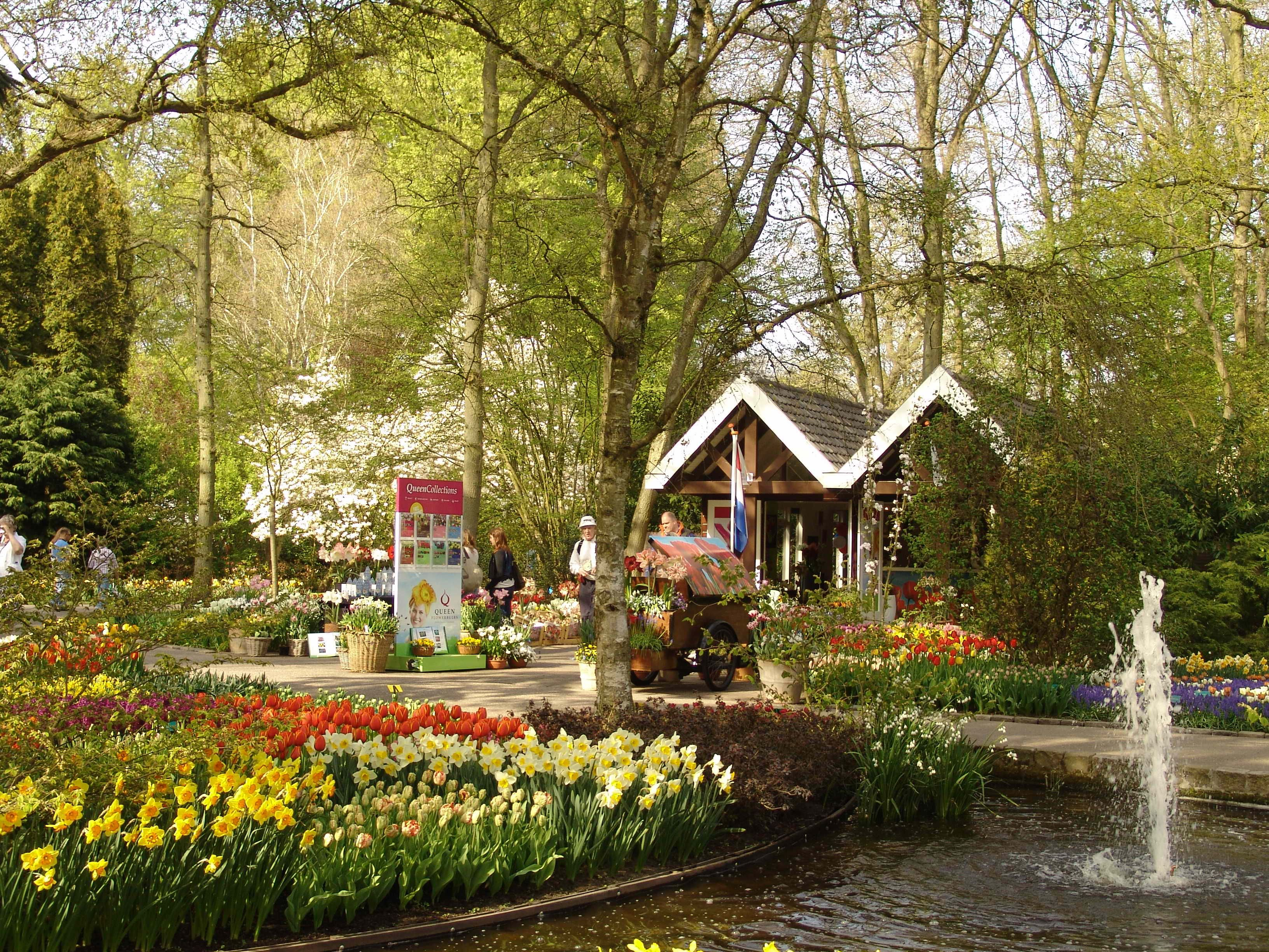 Our own piece of Keukenhof in 2013. This year, it will look just a ...