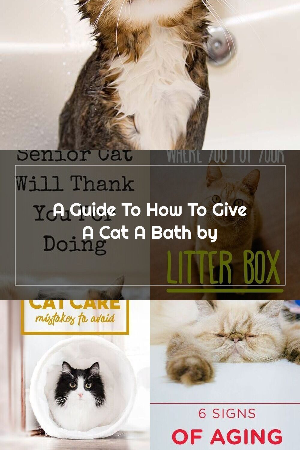 How To Bathe A Cat Tips And Advice Please Remember Please Please Make Sure Your Cat Has No Knots Or Mats Before You Get Them In 2020 Cat Care Tips