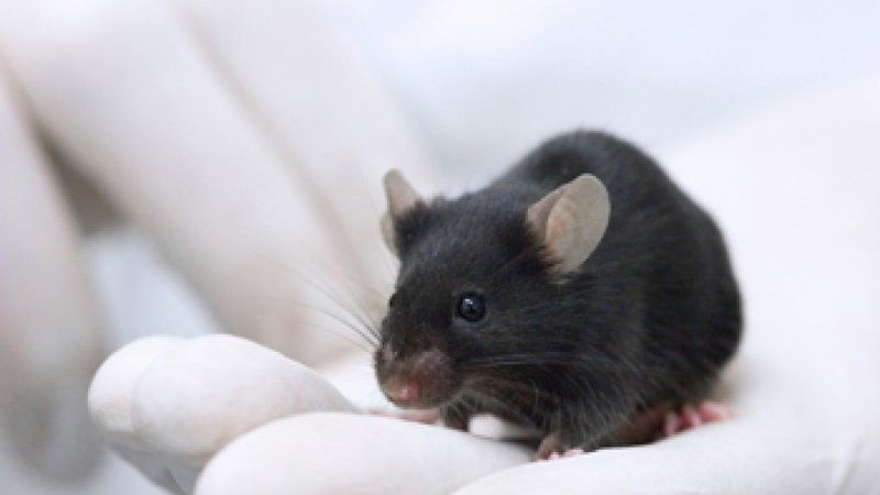 Petition · Stop The AstraZeneca Animal Lab And HQ · Change.org