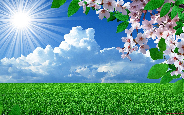 Nature Spring Flowers Landscapes Trees Sky Landscape Background Images Jpg 2880 Wallpaper Nature Flowers Background Images Wallpapers Spring Landscape Photos