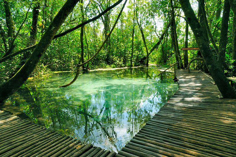 Destinos Paradisiacos As Piscinas Naturais Mais Lindas Do Brasil
