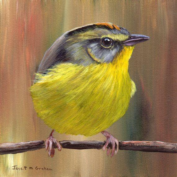 Aves arte pintura dorada coronada reinita sfa fauna - Pintura dorada para madera ...
