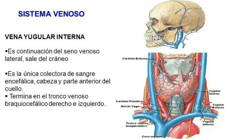 Pin de Carlos Heredia en Medicina   Pinterest   Medicina