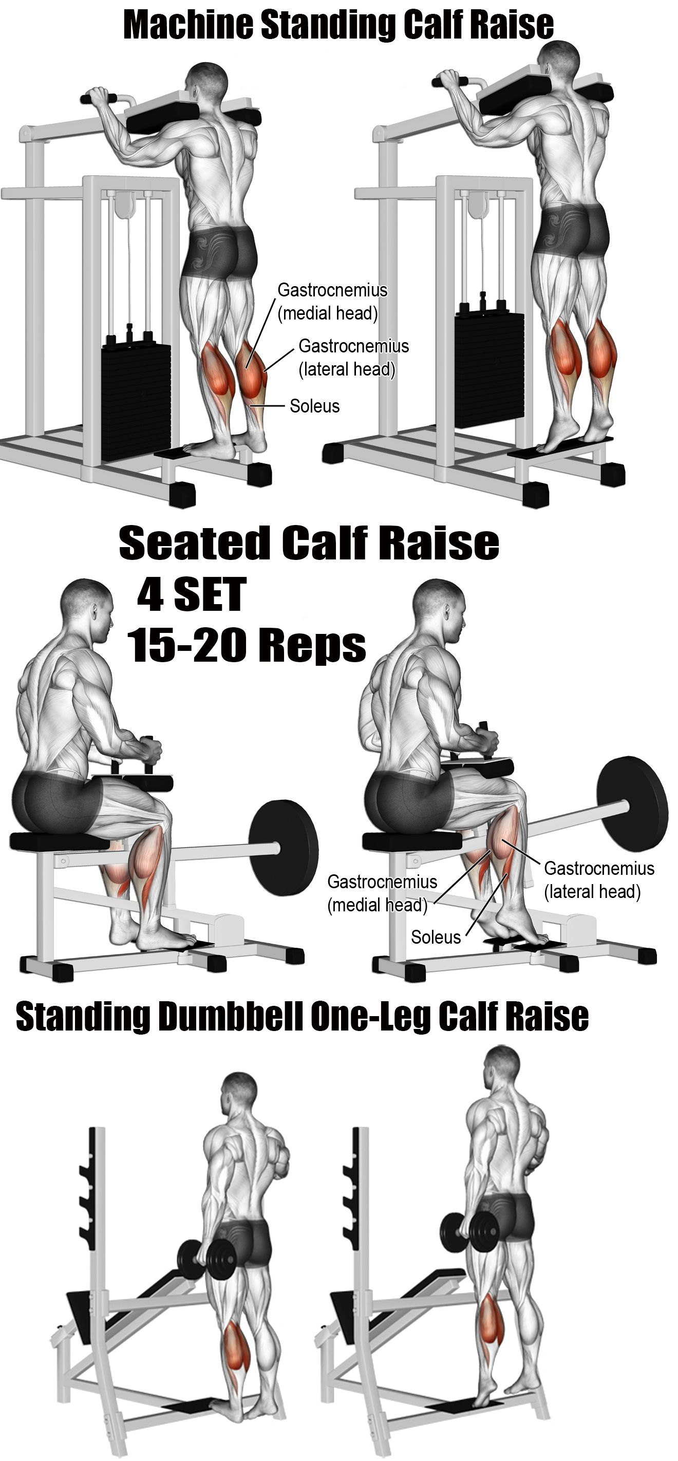 Muscles Of The Legs Amp Quads And Calves