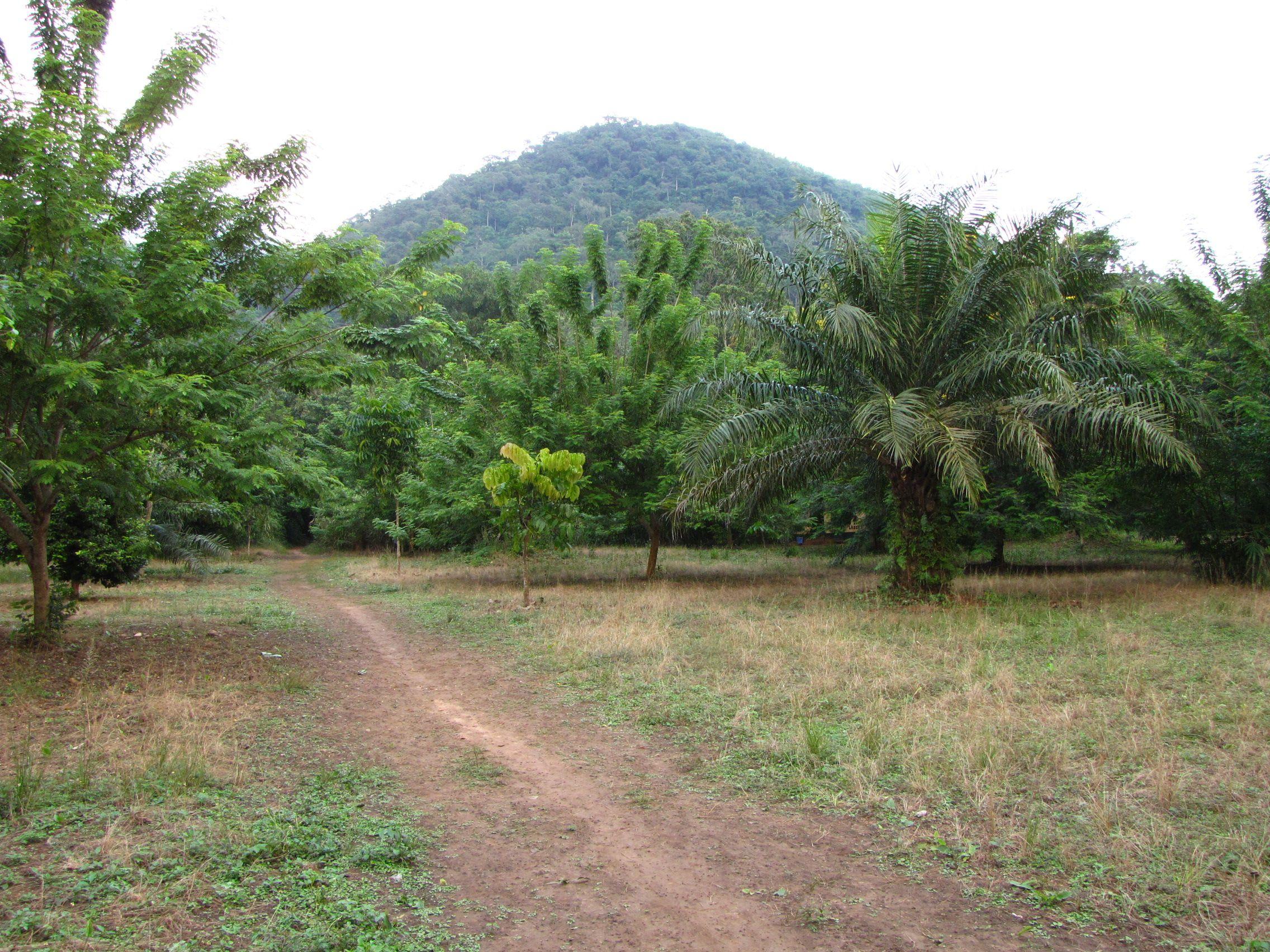 Fancy a hike up Mountain Afadjato, Gbledi Gborgame, Volta Region, Ghana?