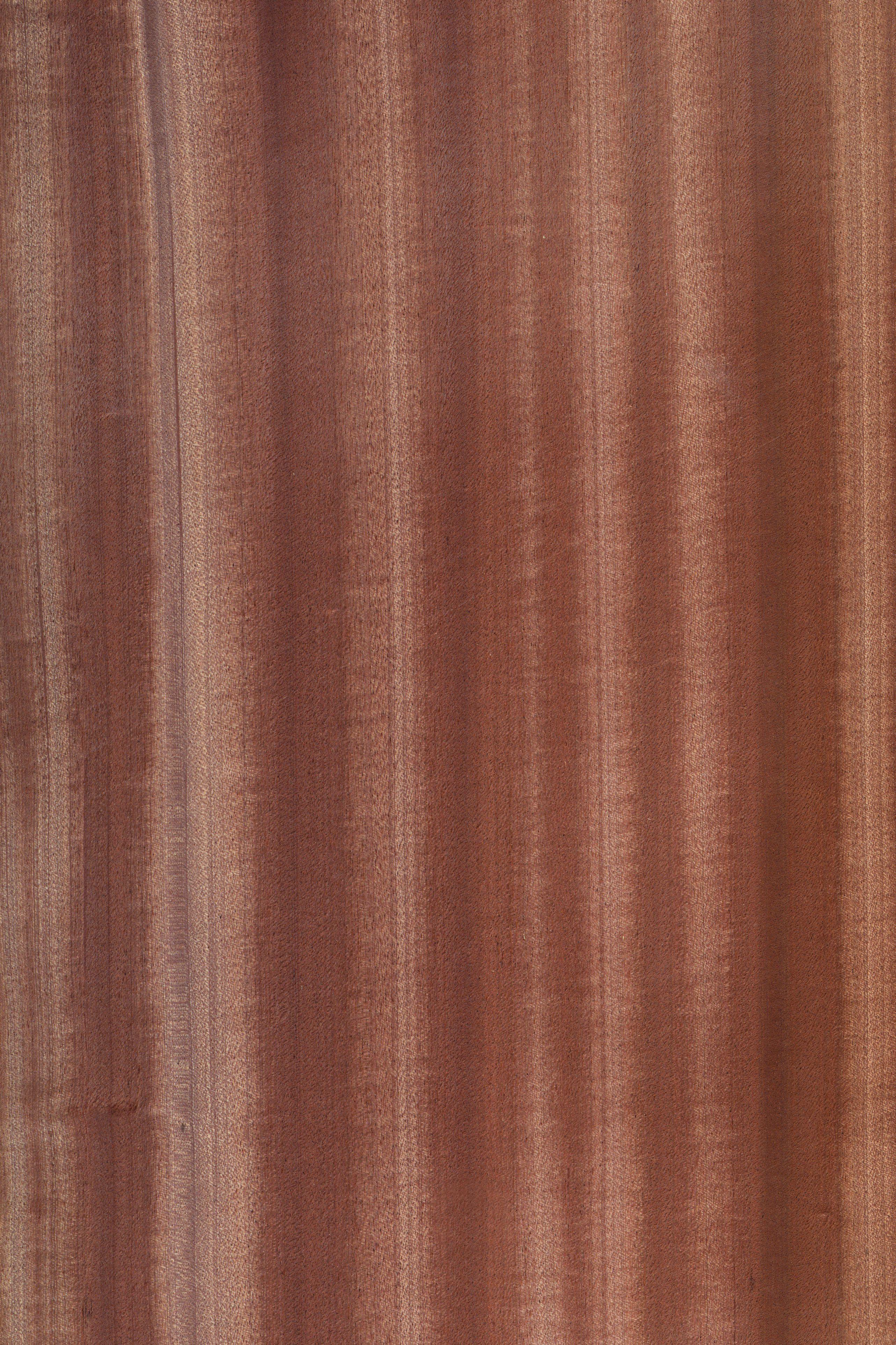 Mahagoni Furnier Holzart Mahagoni Blatt Braun Rot Exoten