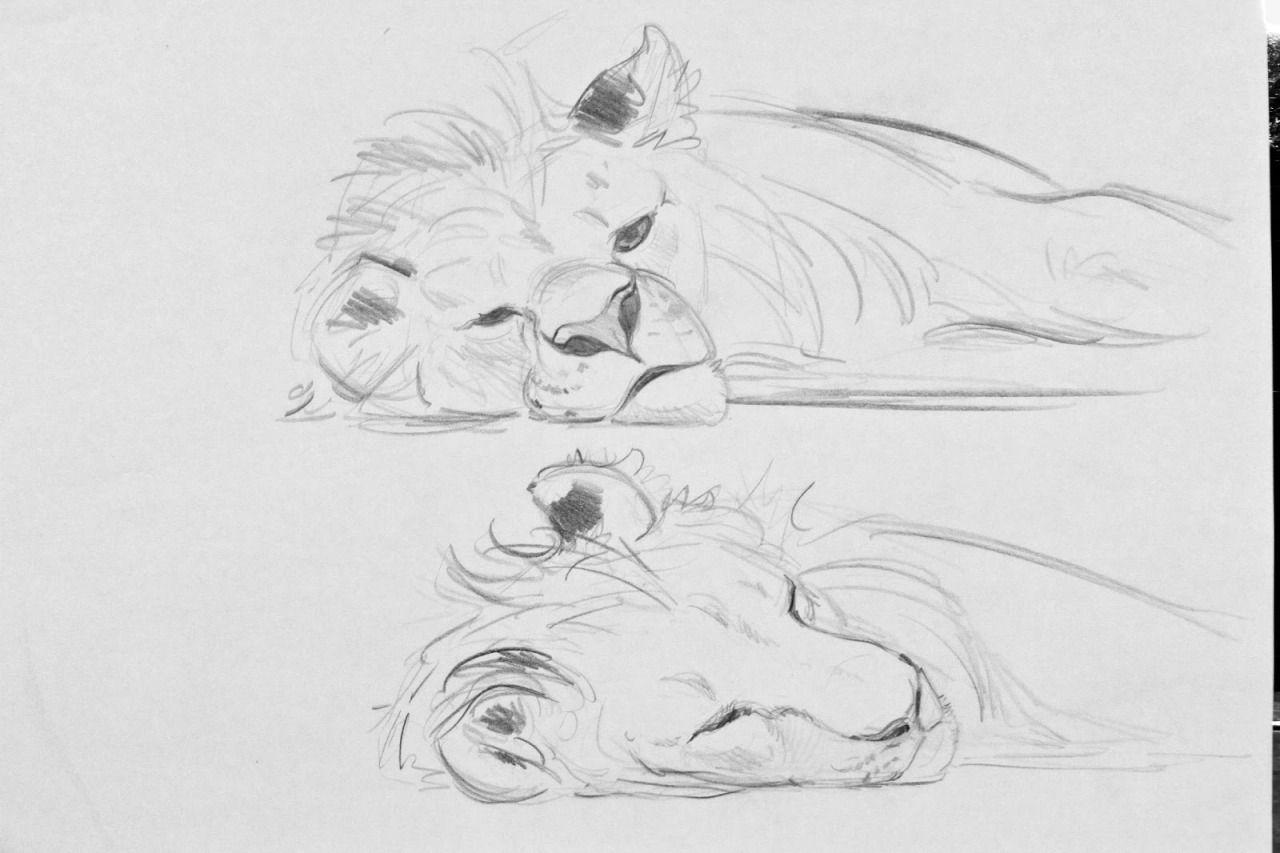 The Lion King By Aaron Blaise Blog Website Www Creatureartteacher Com Online Store Www Creatureartteacher Com Animal Drawings Drawings Art
