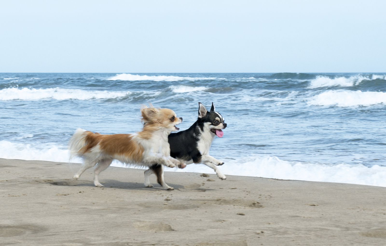 Image result for Brohard off-leash Beach and Paws Park