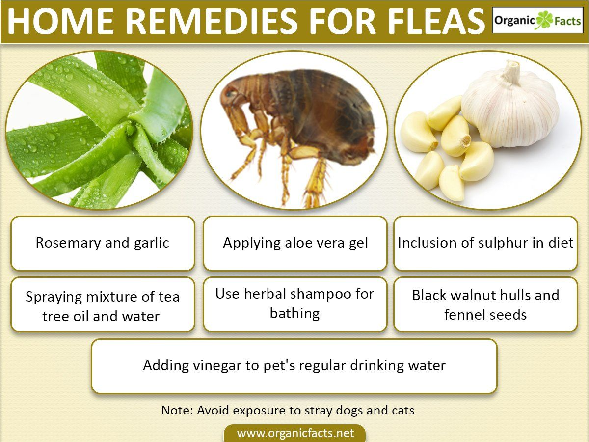 How To Get Rid Of Fleas Flea Remedies Home Remedies For Fleas