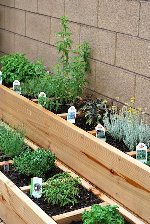 Square foot gardening herb bed that is made so each box holds one ...