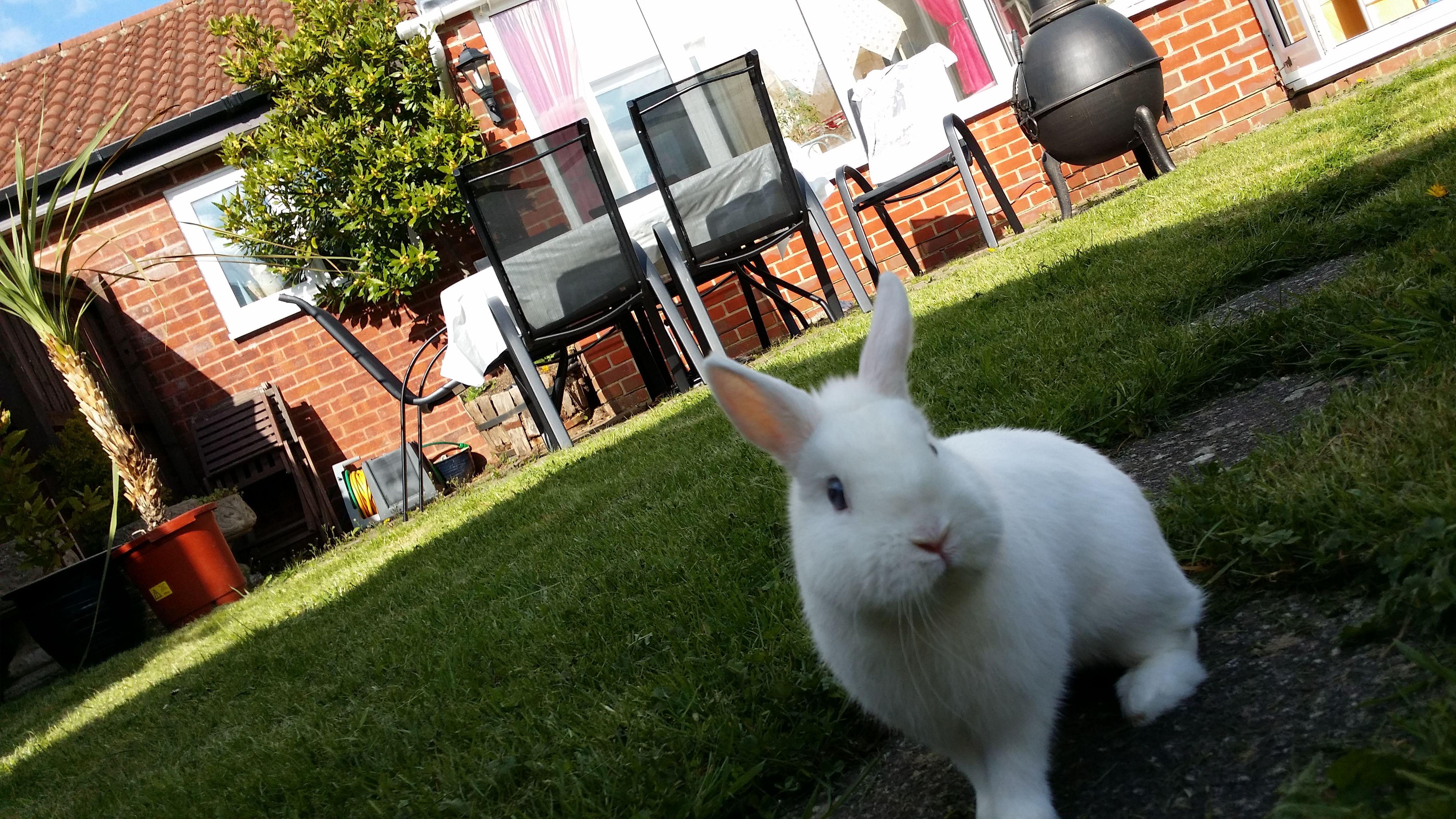 Rodney Rabbit In The Garden At Home