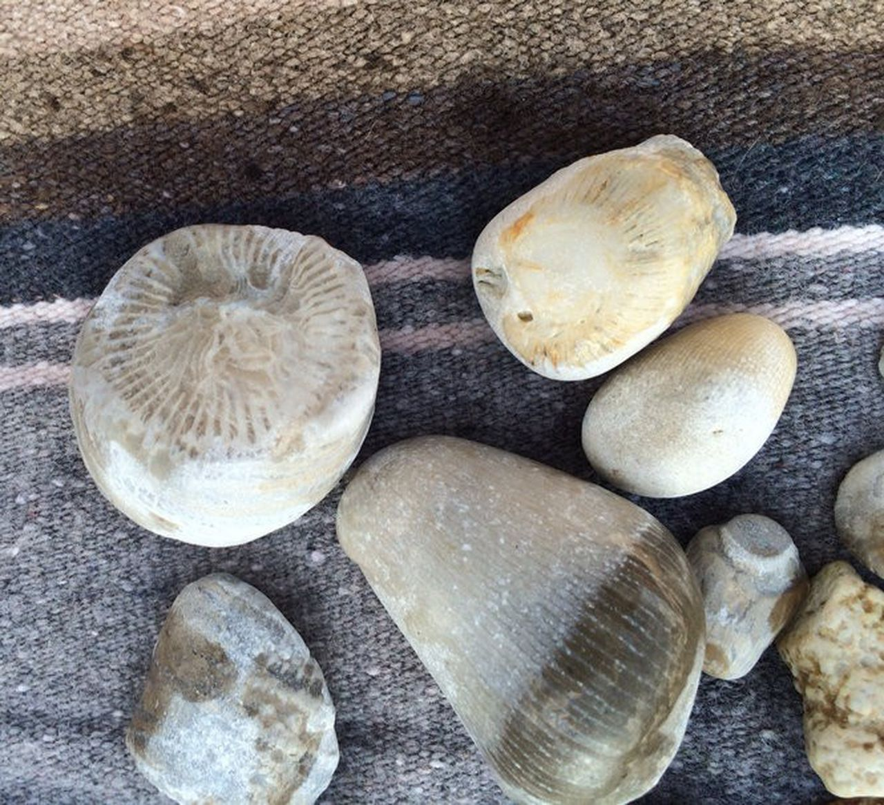 Collectible rocks of southwest lake michigan beaches in