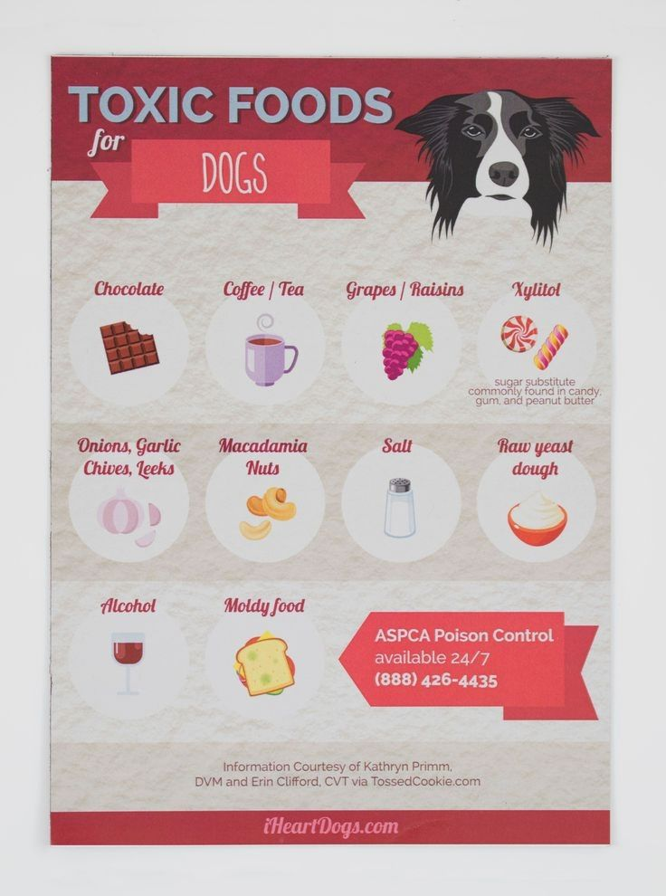 Pin by dogmylove on dogs dog food recipes toxic foods
