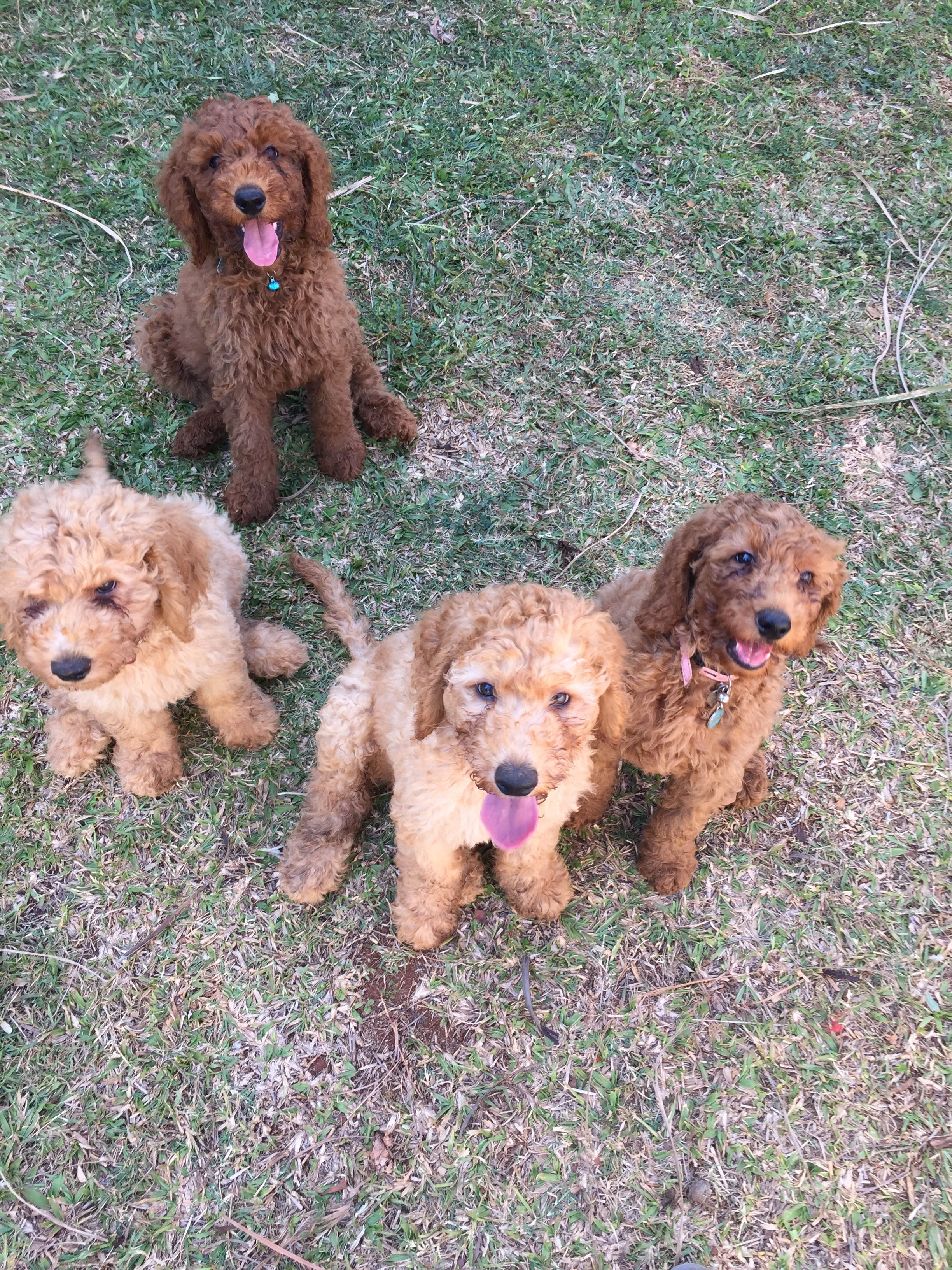 Pin By Lisette Lieberman On Puppy Puppies Golden Retriever