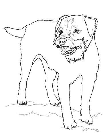 Border Terrier Coloring Page Free Printable Coloring Pages Dog