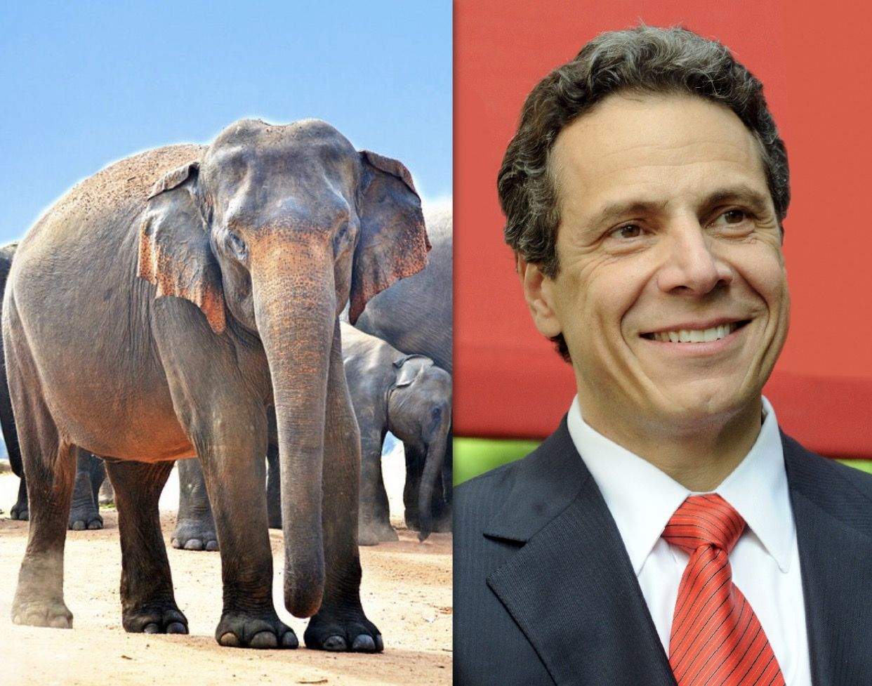 Breaking News Bravo Ny Governor Cuomo Signs The Elephant Protection Act To Safeguard Elephants From Exploitation In Ent Animals Of The World Animals Elephant