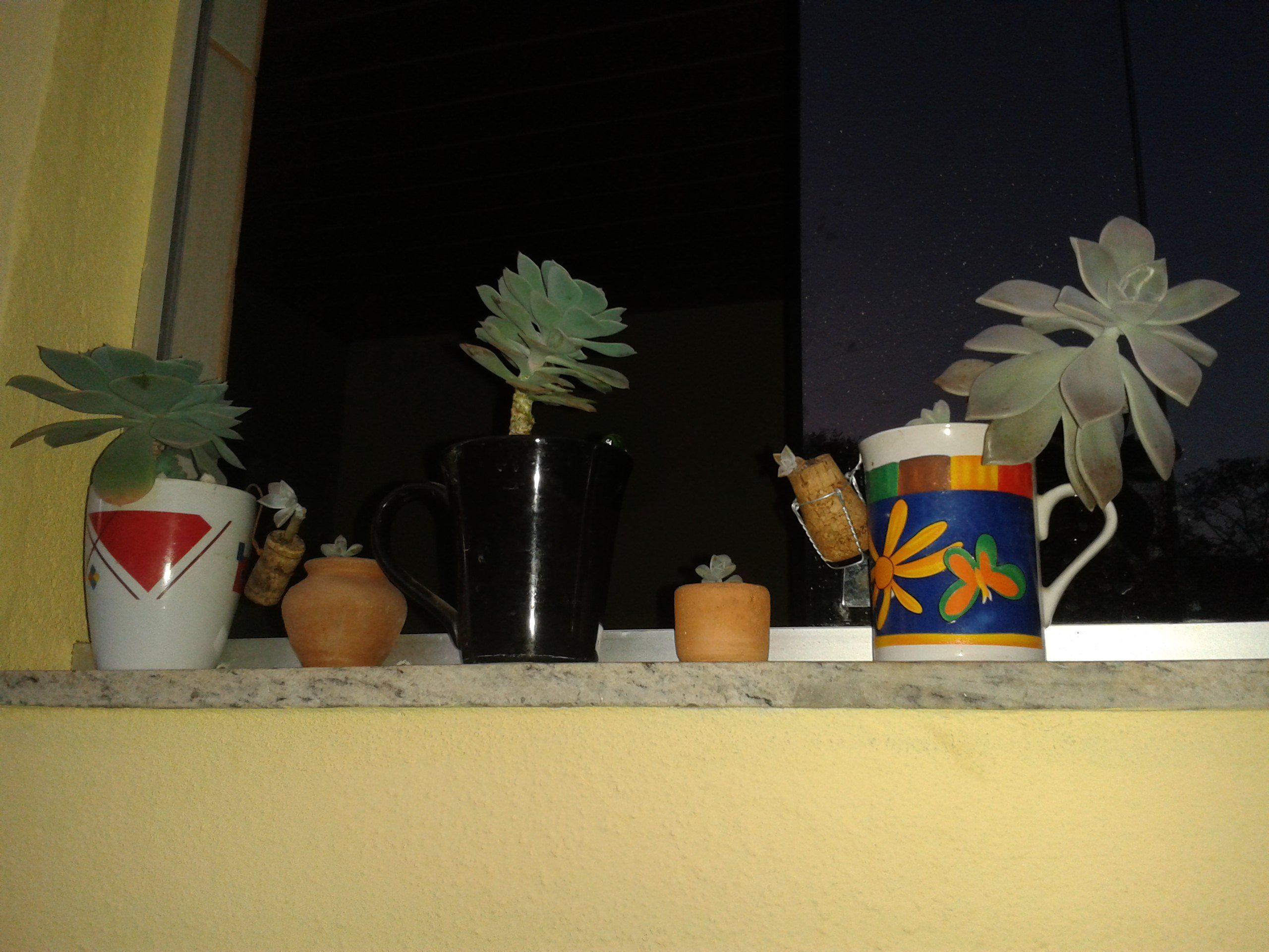 Xícaras nas janelas
