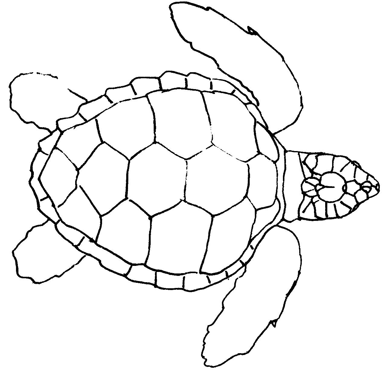 turtle outline Turtle drawing, Turtle outline, Outline