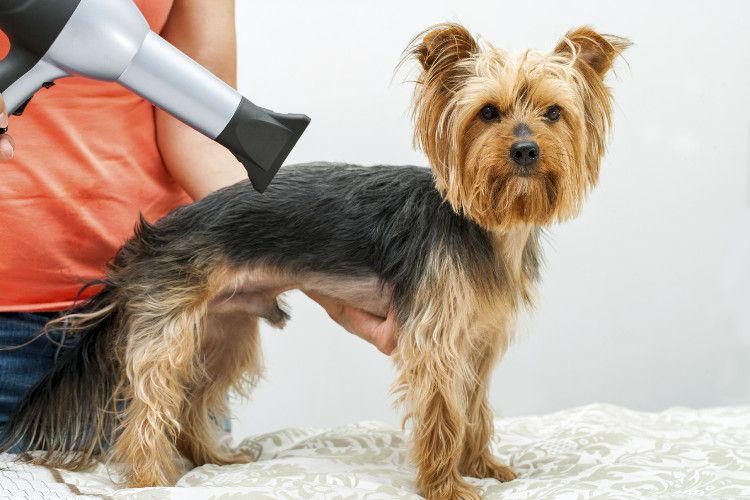 Puppy S First Groom Grooming Salon Animal Behavior College And