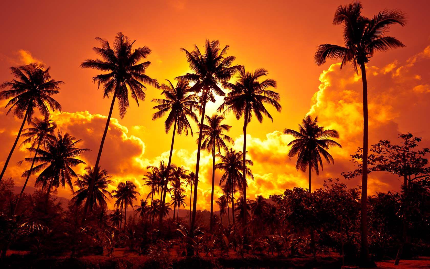 Pin by Debbie Jones on Orange Palm tree sunset, Sunset