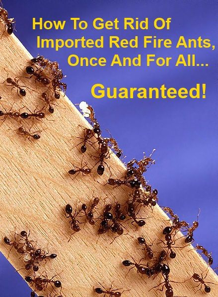 How To Get Rid Of Fire Ants Garden Pinterest Ants Fire Ants