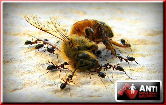 37 Milhões de Abelhas Morrem após o Plantio de Milho Transgênico no Canadá - Disso Você Sabia ?
