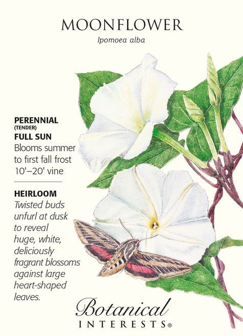 Moonflower Seeds 5 Grams Ipomoea Flowergardening In 2020 Moon Flower Moon Garden Beautiful Flowers Garden