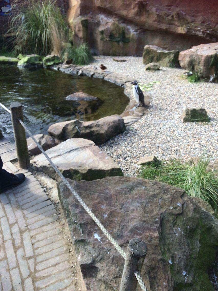 Krefeld Zoo Täter