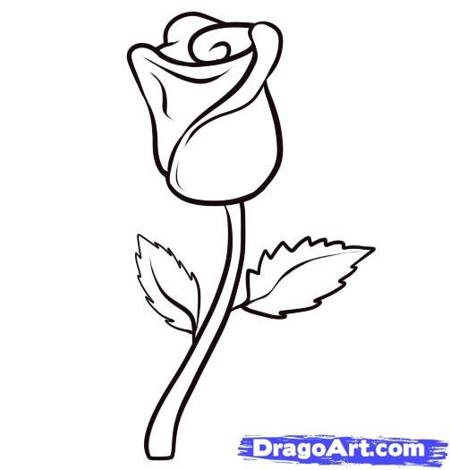 Easy to draw sexiest rose how to draw a rose step 6