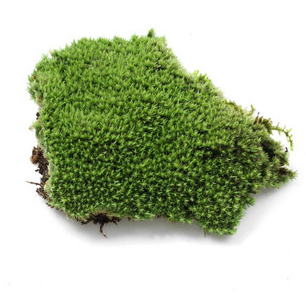 1Pcs DIY Fake Moss Miniature Garden Ornament Craft Fairy Artificial ...