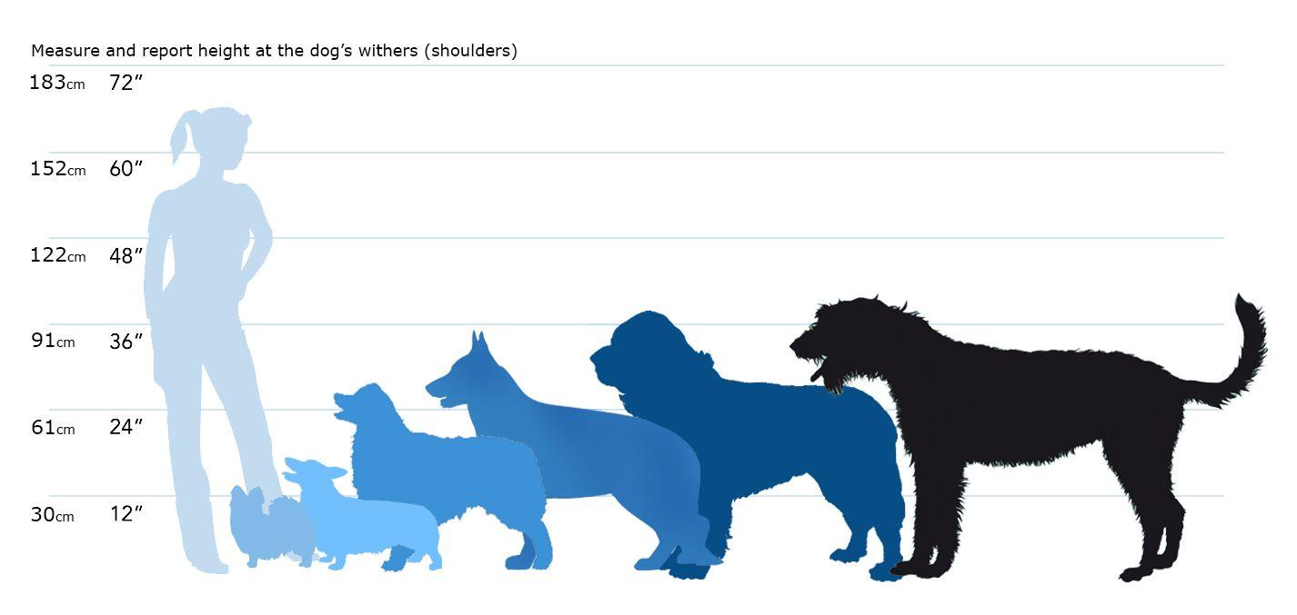 Image result for comparison table for animal shoulder