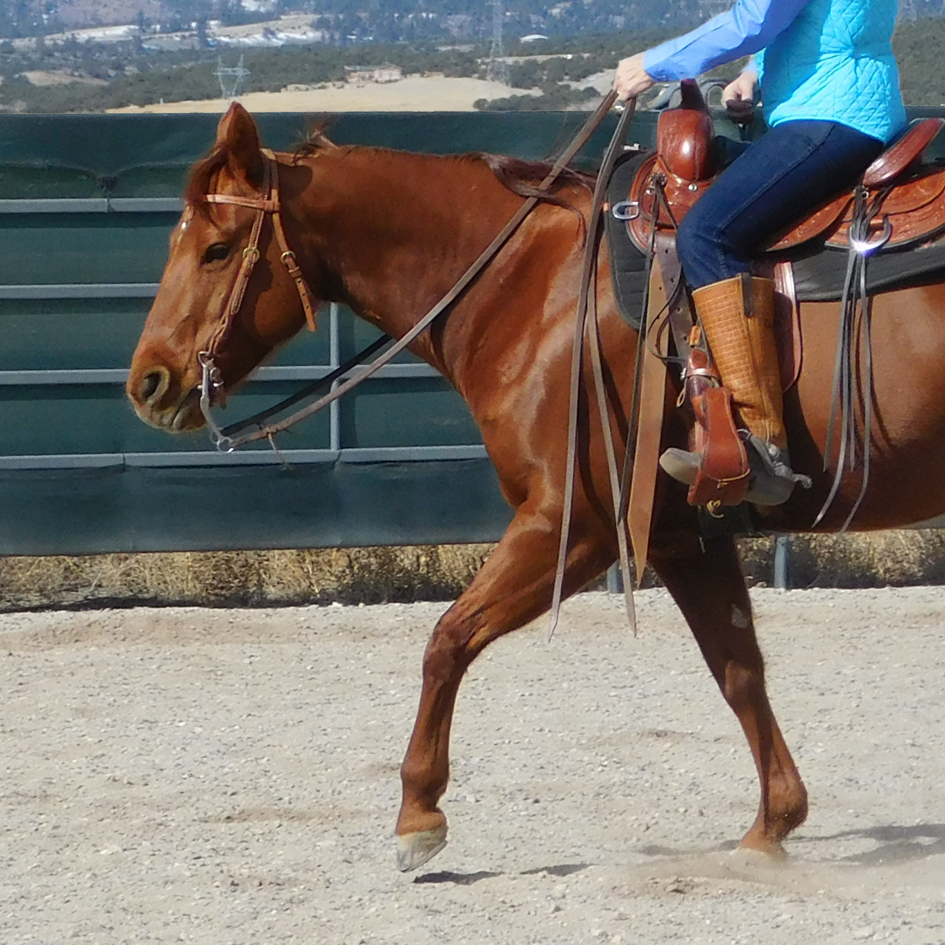 training reining horses