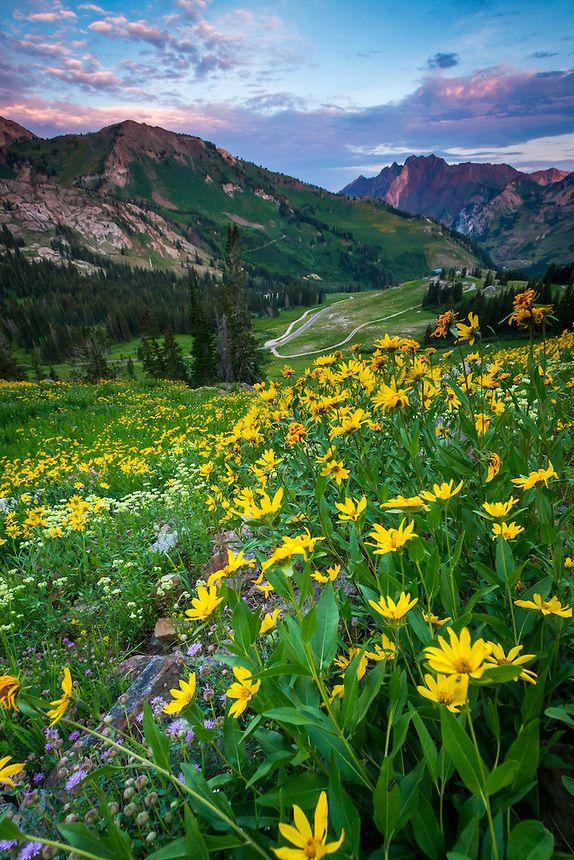 Wasatch Mountain Wildflowers Utah Scenic Photography 2 Clint Losee Scenic Photography Scenic Wild Flowers