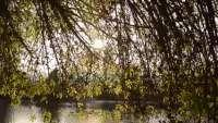 En crisis en agua que llega a la Laguna