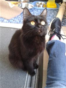 Jessie Ready For Adoption Cat Adoption Cats Adoption