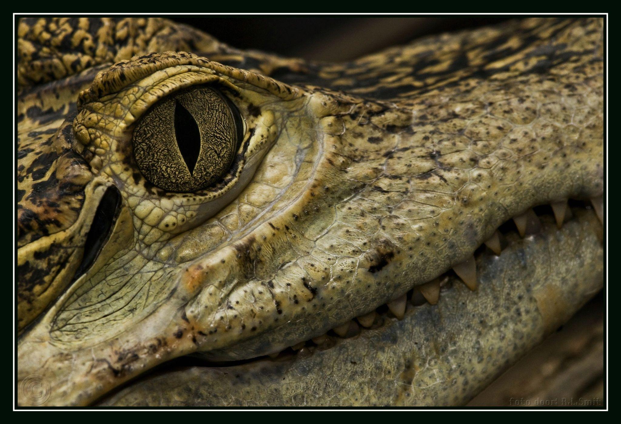 19111f363f0f Croc
