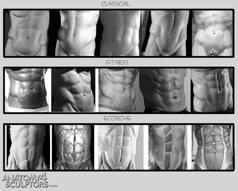 6packs | [3b] Anatomy: Male Body | Pinterest | Anatomy, Anatomy ...