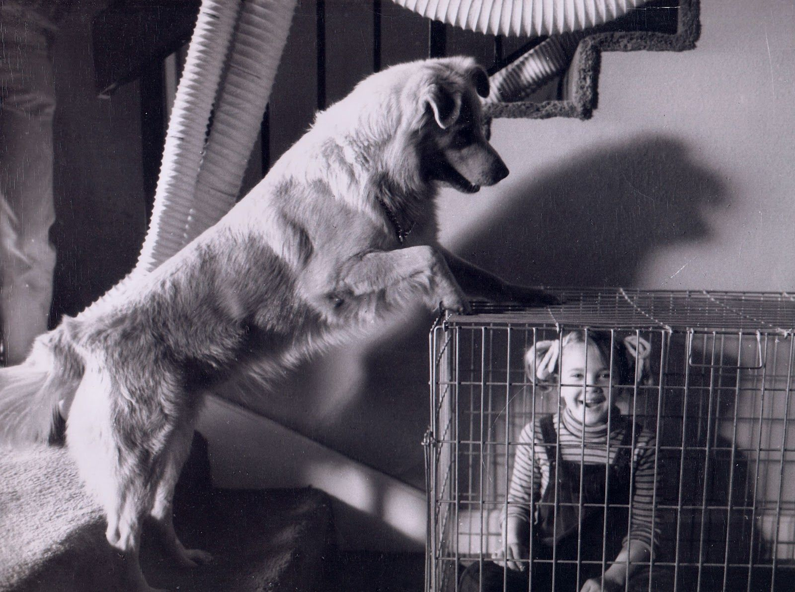 Image result for e.t. 1982 dog